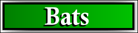 South Sarasota, FL Bat Removal Service