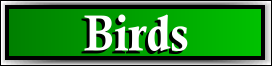 South Sarasota, FL Bird and Pigeon Removal Service