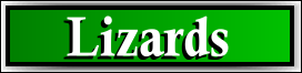 South Sarasota, FL Lizard and Iguana Removal Service