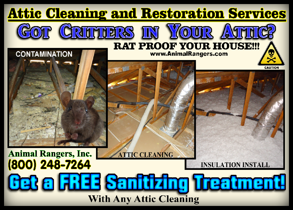 Rats in the Attic / Cleaning & Sanitizing