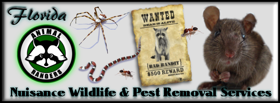 Boca Grande, FL Animal Removal & Pest Control Services