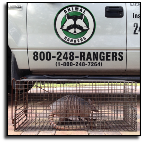 Lauderdale Lakes, FL Armadillo Removal