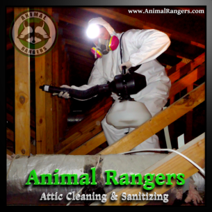 Palm Beach County, FL Sanitizing Services