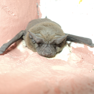 Bat Removal Services in Fort Lauderdale, FL