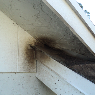 Get Rid of Bats in the Roof - South Bradenton, FL