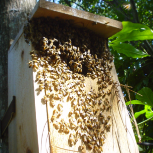 North Lauderdale, FL Bee Removal Specialists
