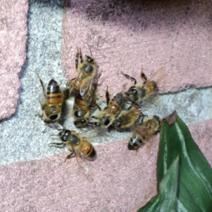 Bradenton, FL Bee Control and Wasp Extermination Services