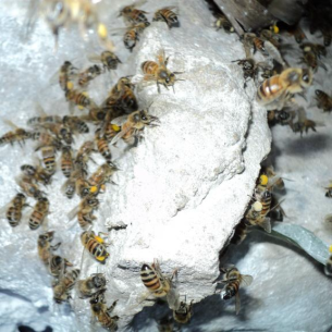 North Lauderdale, FL Bee Control Service