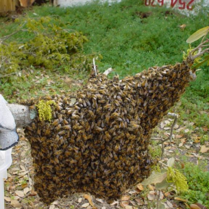 Port Charlotte, FL Beehive Removal Services