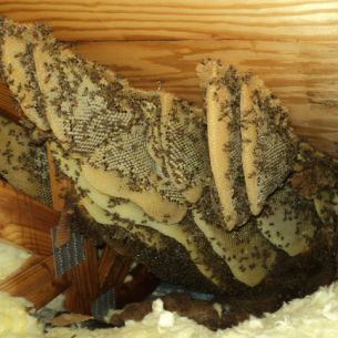 Get Rid of Bees in the Attic or Roof - North Lauderdale, FL