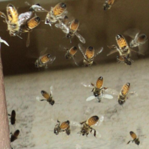 Bradenton, FL Bee Removal and Wasp Control Services