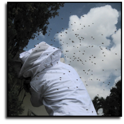 Port St. Lucie, FL Bee Removal