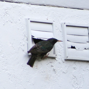 Fort Lauderdale, FL Bird Control and Exclusion Services
