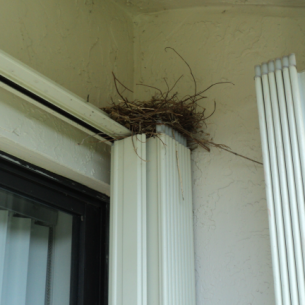 Bird Nest Removal Services in Palm Beach County, FL