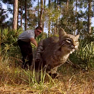 Bobcat Relocation Services in Southwest Ranches, FL