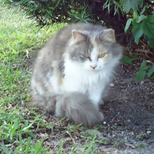 Feral Cat Removal Services in South Bradenton, FL