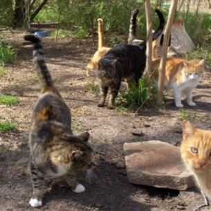 South Bradenton, FL Feral Cat Control Services