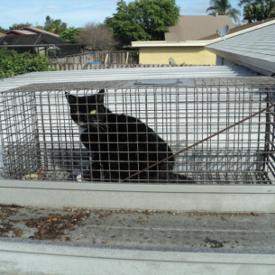 South Bradenton, FL Feral Cat Trappers