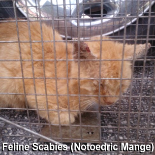 South Bradenton, FL Animal Control - Feral Cat Removal