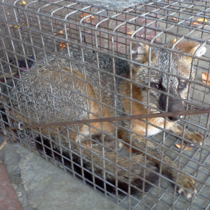 Port Charlotte, FL Nuisance Wildlife and Fox Removal Services
