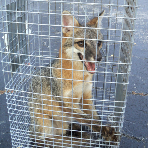 North Lauderdale, FL Fox Control Services