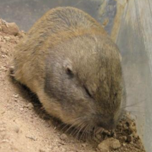 Get Rid of Gophers - Sarasota, FL Animal Control