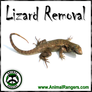 Wilton Manors, FL Lizard Control Services