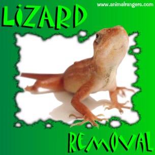 Bradenton, FL Lizard Removal Services