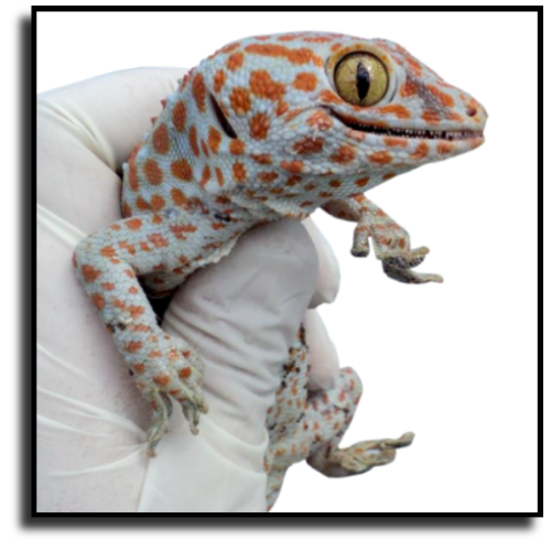 Port Charlotte, FL Lizard Removal
