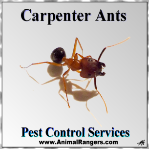 Get Rid of Ants - Southwest Ranches, FL