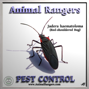 Pest Control Services in West Palm Beach, FL