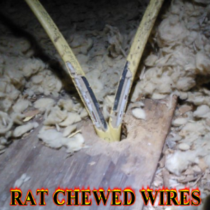 Fort Lauderdale, FL Rat Exterminators and Pest Control Services