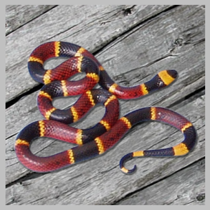 Palm Beach County, FL Snake Control Services
