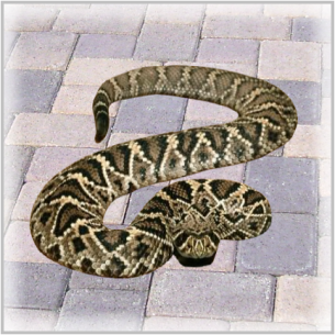 Palm Beach County, FL Venomous Snake Removal Services