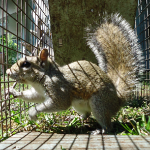Nuisance Squirrel Removal Services in Palm Beach County, FL