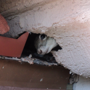 Get Rid of Squirrels in the Attic - Palm Beach County, FL Animal Control