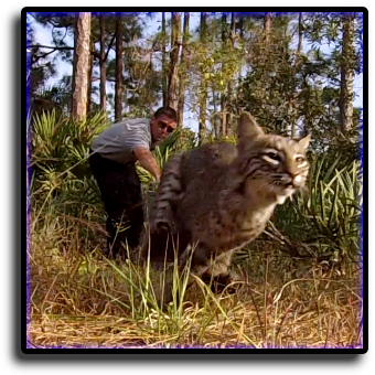 Cat Control South Sarasota, FL Animal Rangers Nuisance Wildlife Removal & Pest Control Services