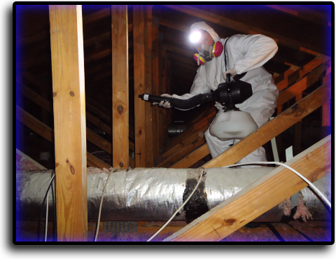 Attic Cleaning South Sarasota, FL Animal Rangers Nuisance Wildlife Removal & Pest Control Services