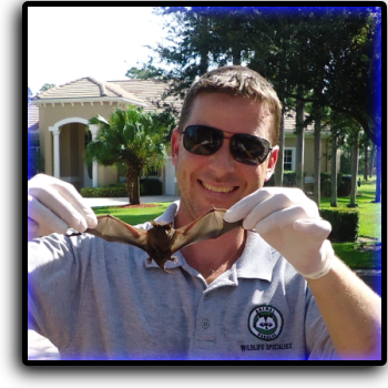 Bat Removal Osprey, FL Animal Rangers Nuisance Wildlife Removal & Pest Control Services