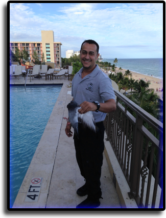 Pigeon Control South Sarasota, FL Animal Rangers Nuisance Wildlife Removal & Pest Control Services