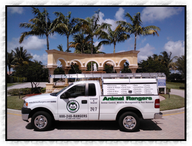 Fort Pierce, FL Nuisance Animal Removal Services