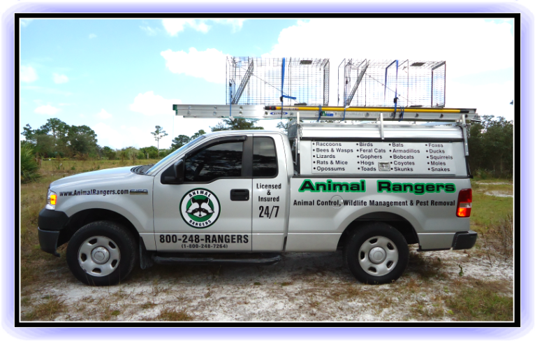 Florida Animal Control, Nuisance Wildlife Removal & Pest Control Services