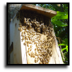 Florida - Bee Removal Experts