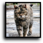 Pembroke Pines, FL Feral Cat Removal