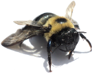 Florida Bee Control Experts